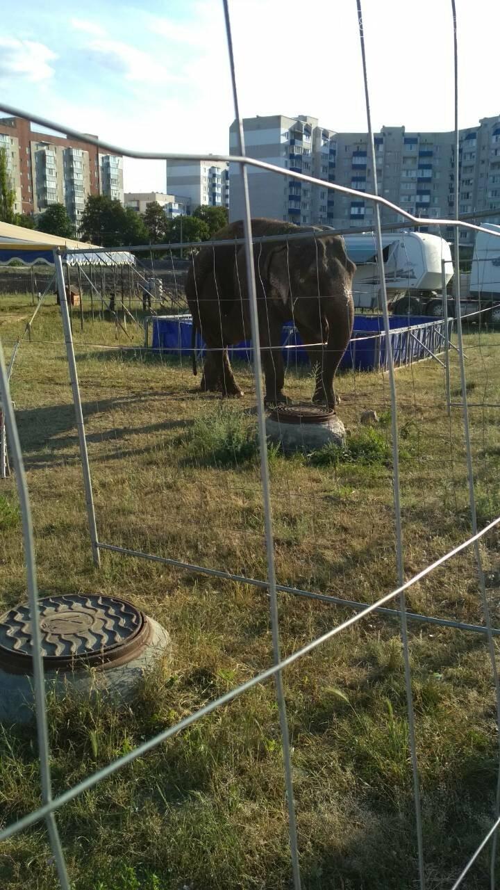 В Кам'янець приїхав Будапештський цирк, фото-2
