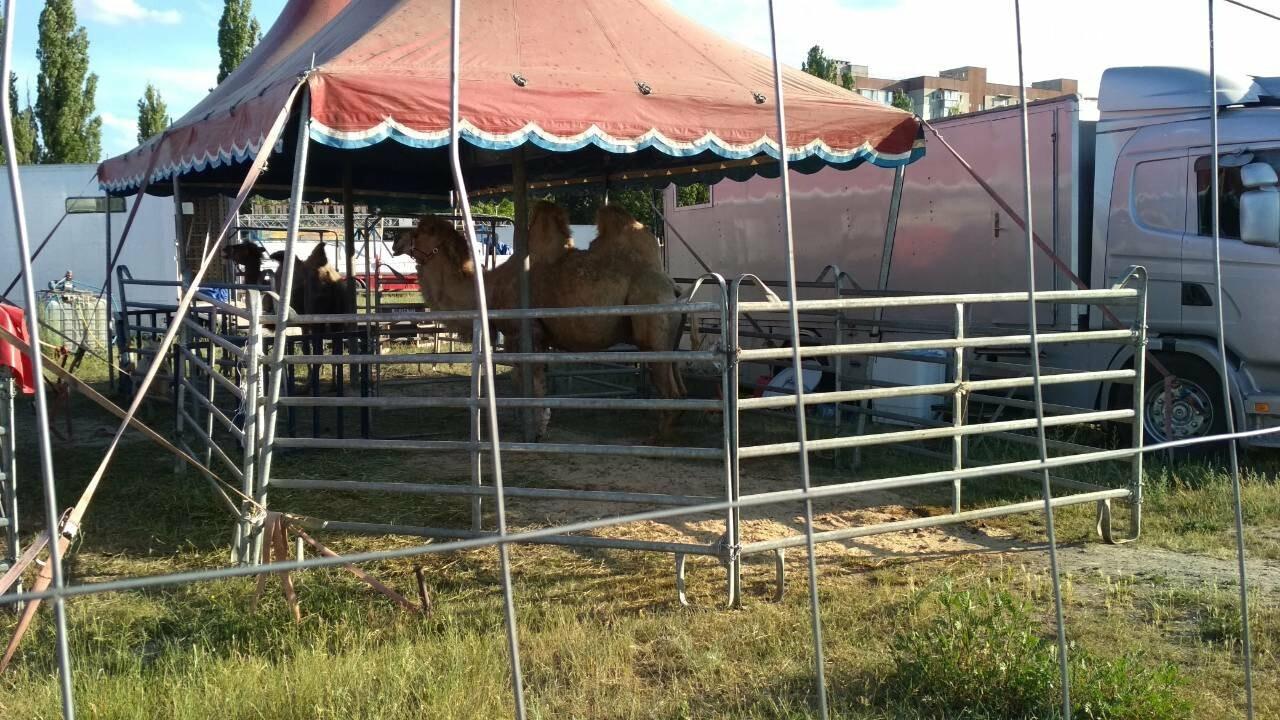 В Кам'янець приїхав Будапештський цирк, фото-3