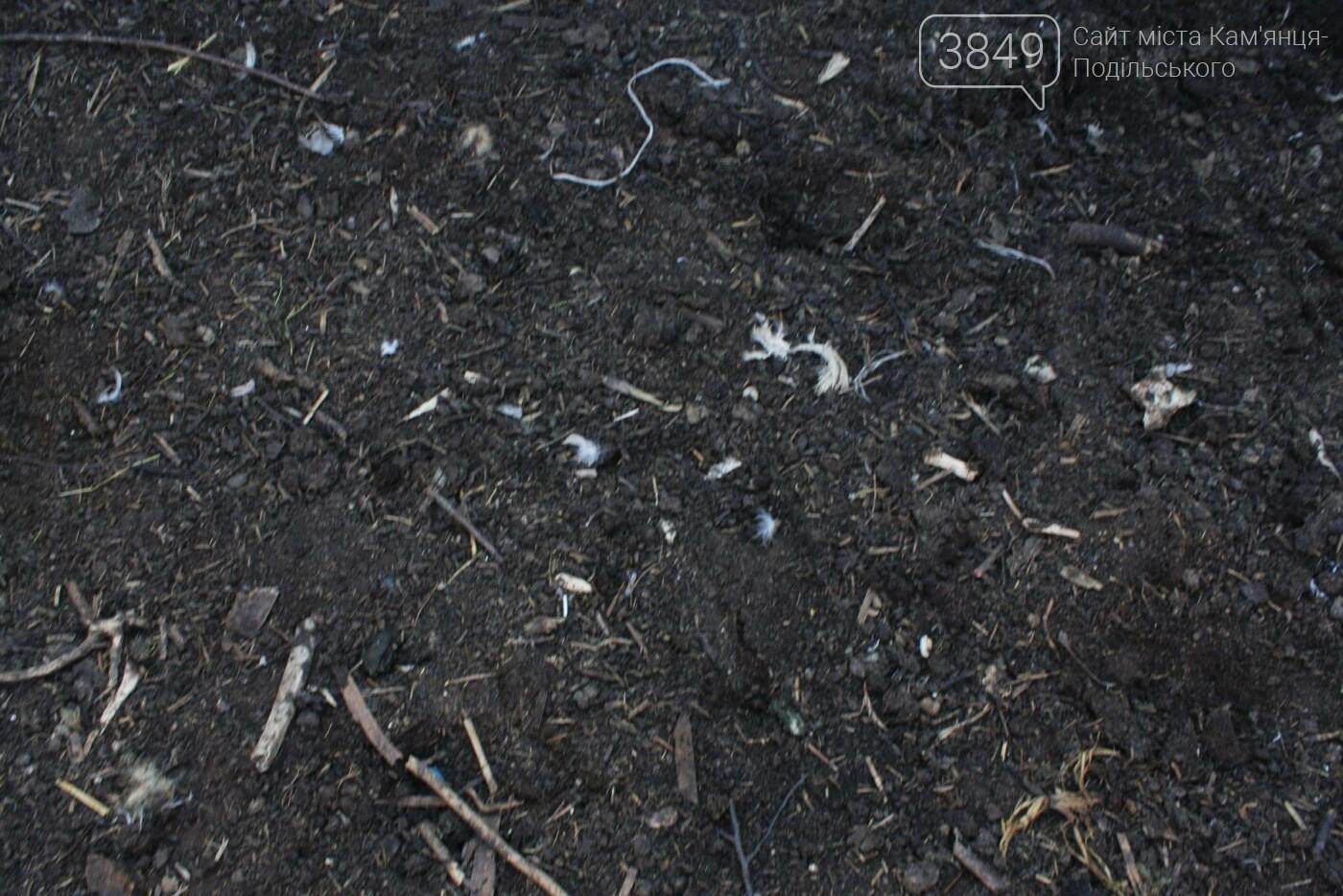 """В Кам'янці відбулось """"народне віче"""" щодо жорстокого поводження з тваринами, фото-20"""