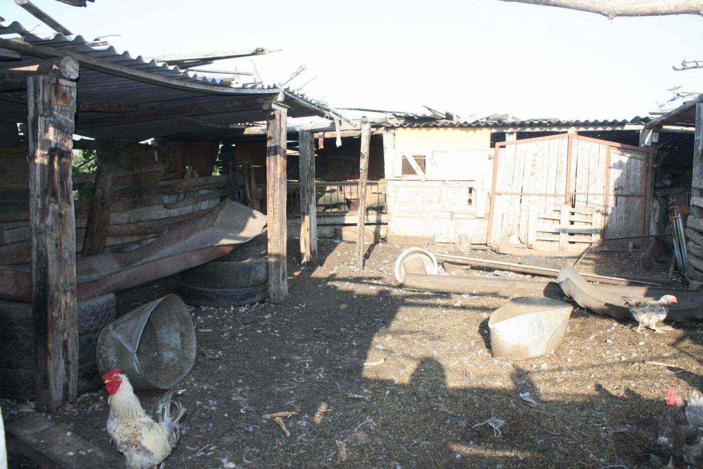 """В Кам'янці відбулось """"народне віче"""" щодо жорстокого поводження з тваринами, фото-22"""