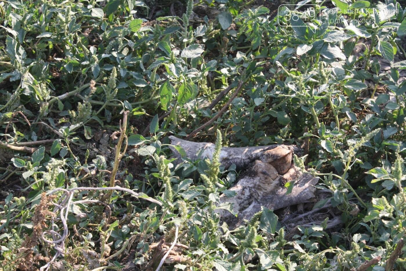 """В Кам'янці відбулось """"народне віче"""" щодо жорстокого поводження з тваринами, фото-26"""