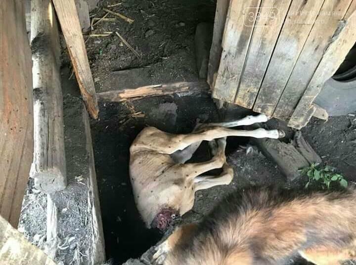 """В Кам'янці відбулось """"народне віче"""" щодо жорстокого поводження з тваринами, фото-1"""