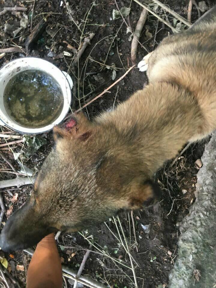"""В Кам'янці відбулось """"народне віче"""" щодо жорстокого поводження з тваринами, фото-3"""