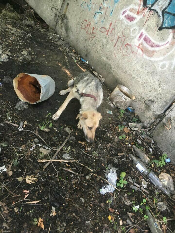 """В Кам'янці відбулось """"народне віче"""" щодо жорстокого поводження з тваринами, фото-4"""