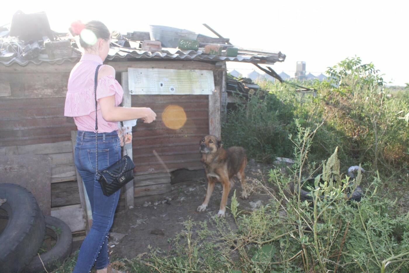 """В Кам'янці відбулось """"народне віче"""" щодо жорстокого поводження з тваринами, фото-12"""
