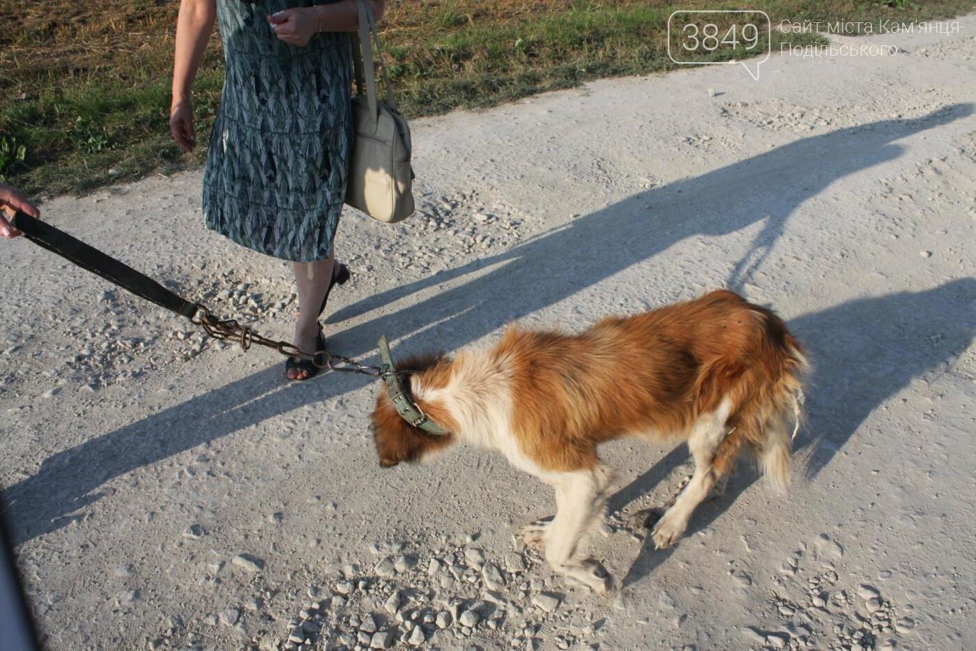 """В Кам'янці відбулось """"народне віче"""" щодо жорстокого поводження з тваринами, фото-17"""