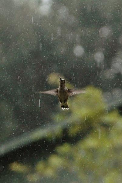 Увага! Попередження про сильні дощі, град та шквали , фото-1