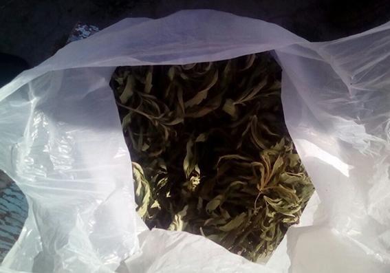 Кам`янчанин облаштував сучасну теплицю для вирощування коноплі у себе вдома, фото-5