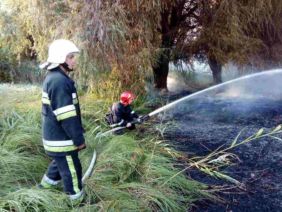 У Кам`янці на приватній території сталося загоряння дров, фото-1