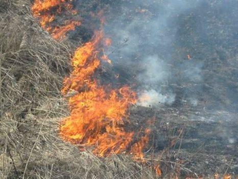 У Кам'янець-Подільському районі підпалили поле, фото-1
