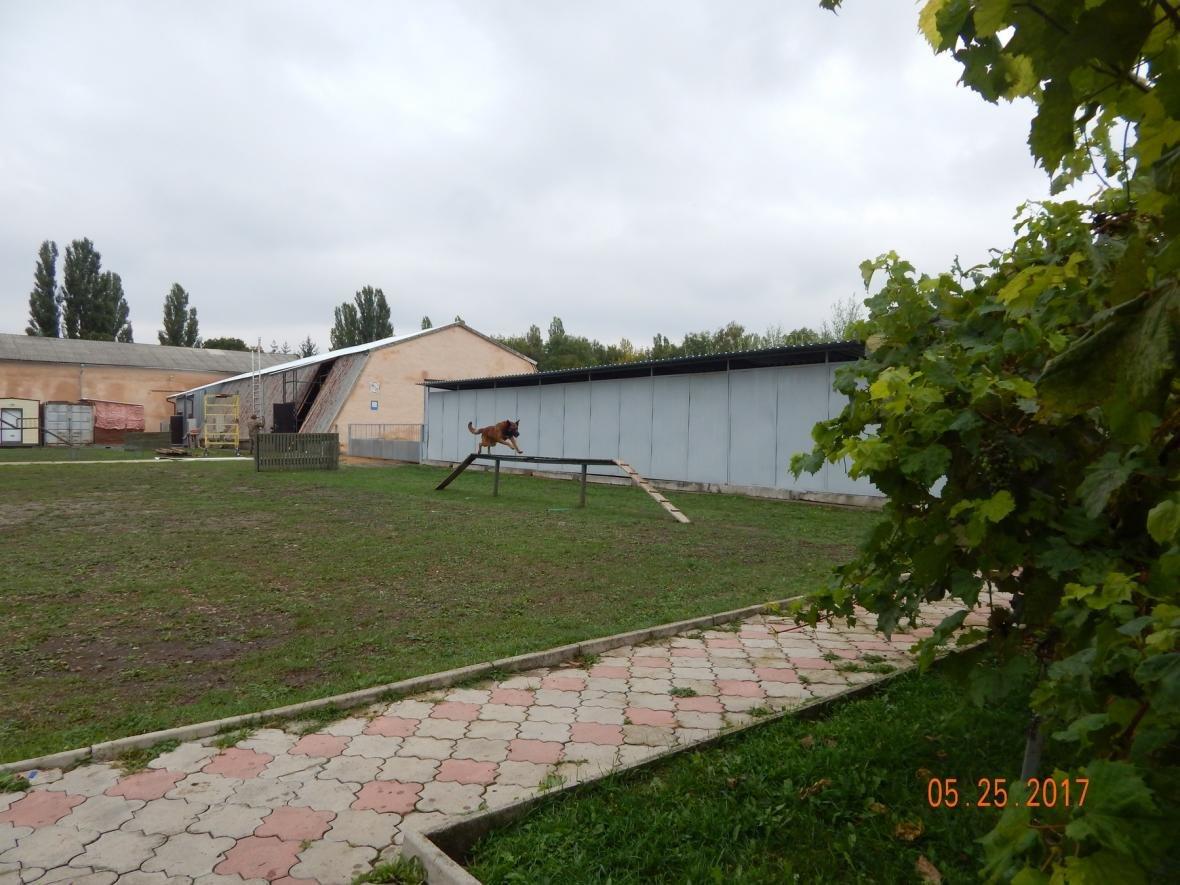 ЗОШ №15 у гостях у військовийх Центру розмінування, фото-7