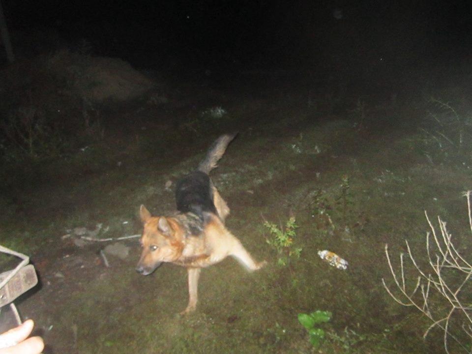 Рятувальники врятували собаку з каналізаційного колодязя, фото-1