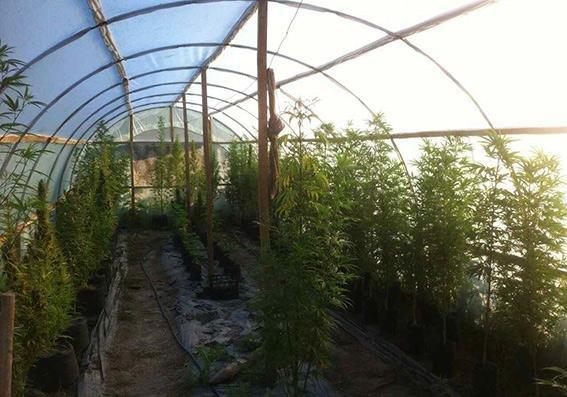 У Хмельницькій області вилучено наркотиків майже на 76 мільйонів гривень, фото-1