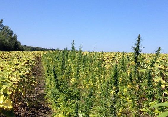 У Хмельницькій області вилучено наркотиків майже на 76 мільйонів гривень, фото-2