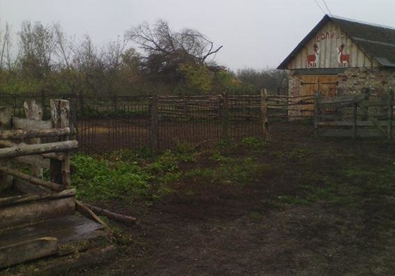 На Хмельниччині неповнолітні намагались продати краденого коня, фото-1