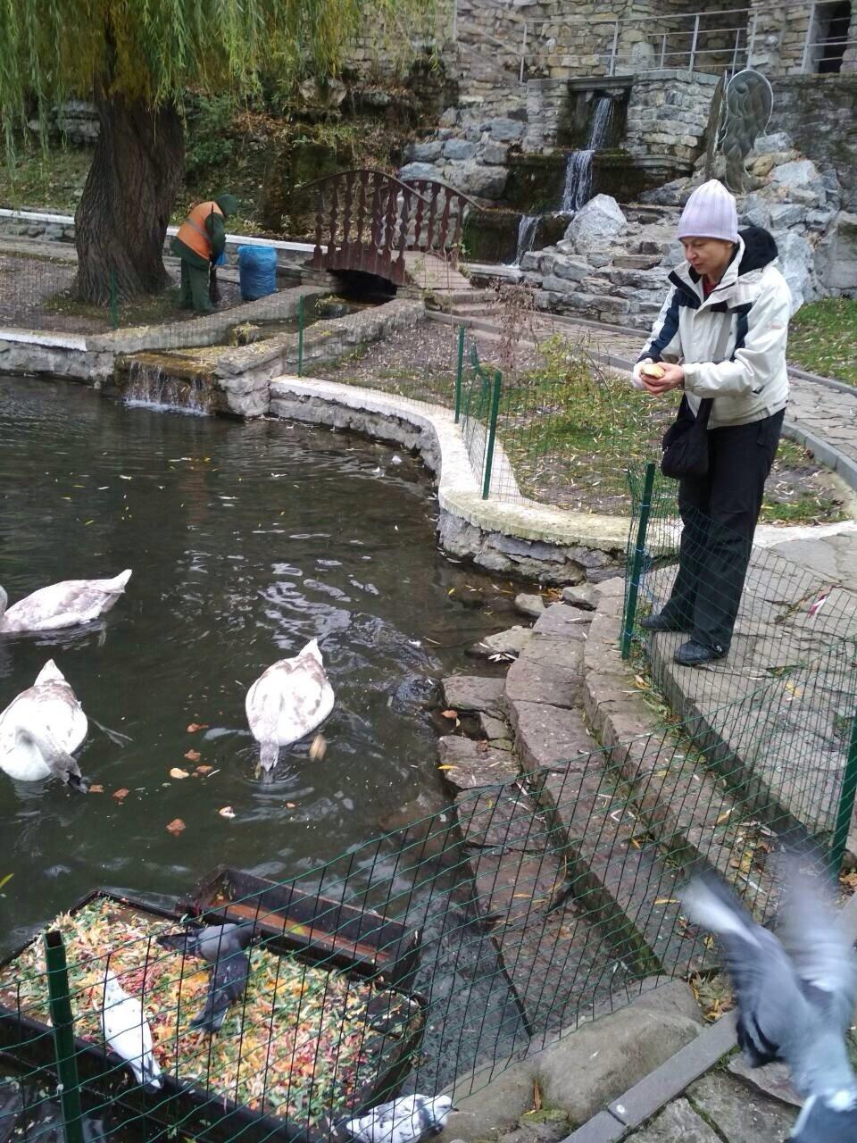 Кам'янчани скаржаться, що лебедів недогодовують, фото-3