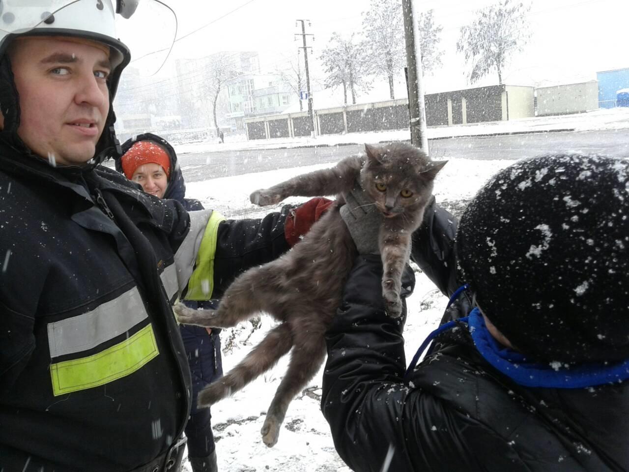 Кіт-щасливець: повернення додому, фото-1