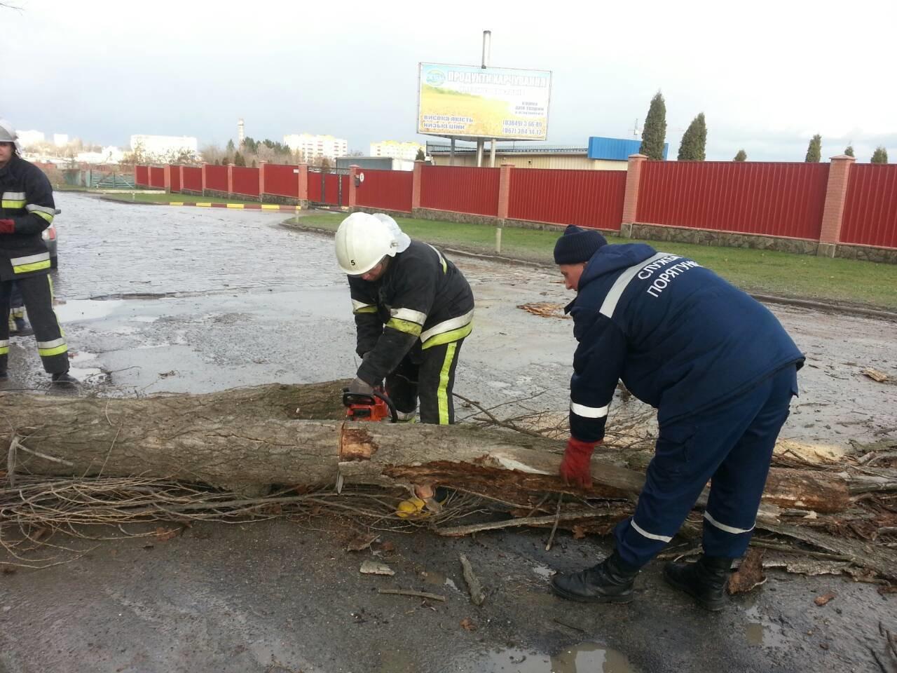 У Кам'янці-Подільському дерево перекрило рух автотранспорту, фото-1