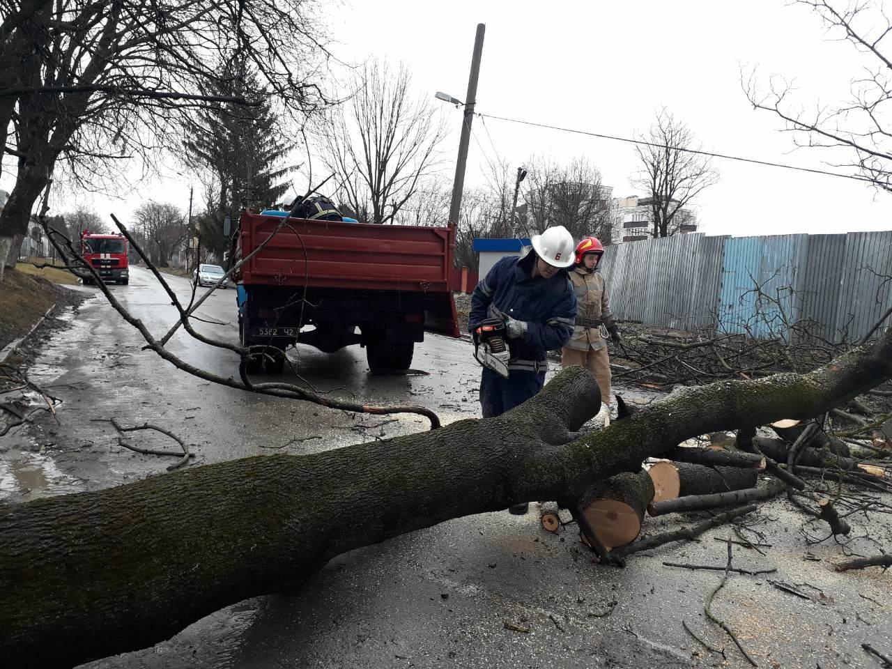 У Кам'янці на проїжджу частину впало дерево, фото-2
