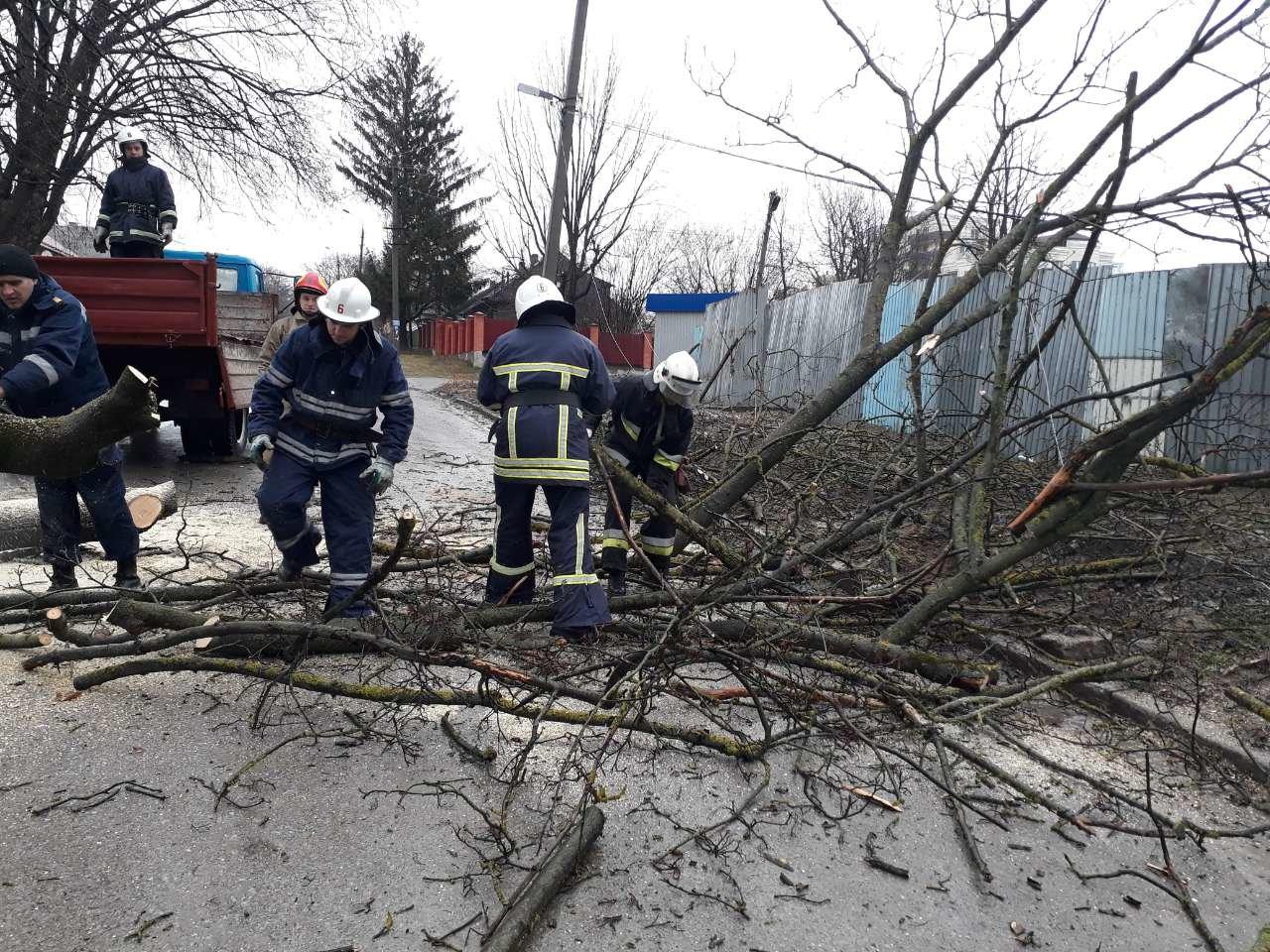 У Кам'янці на проїжджу частину впало дерево, фото-3