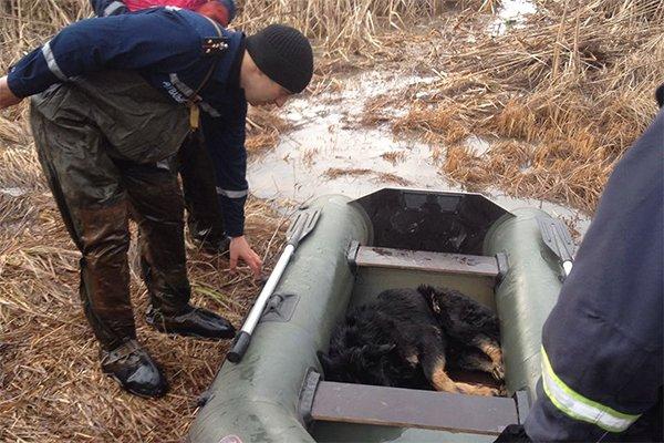 На Хмельниччині врятували собаку, що провалився під лід, фото-2