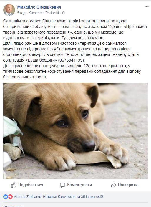 Що робити з безпритульними собаками на вулицях Кам'янця?, фото-1