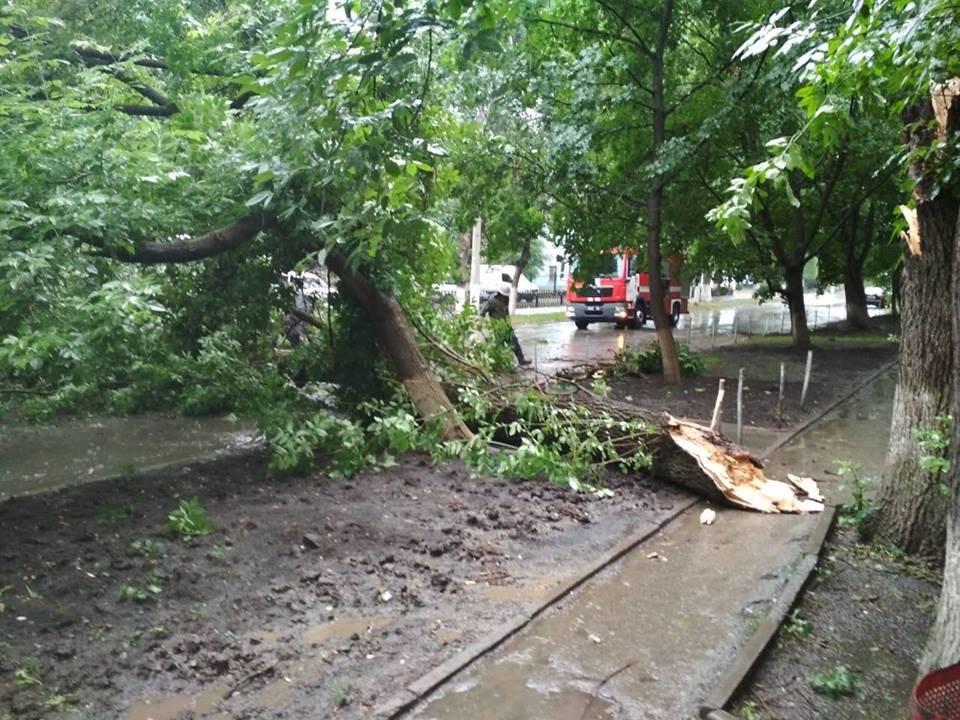 На вулиці Гагаріна на проїжджу частину впало дерево, фото-1