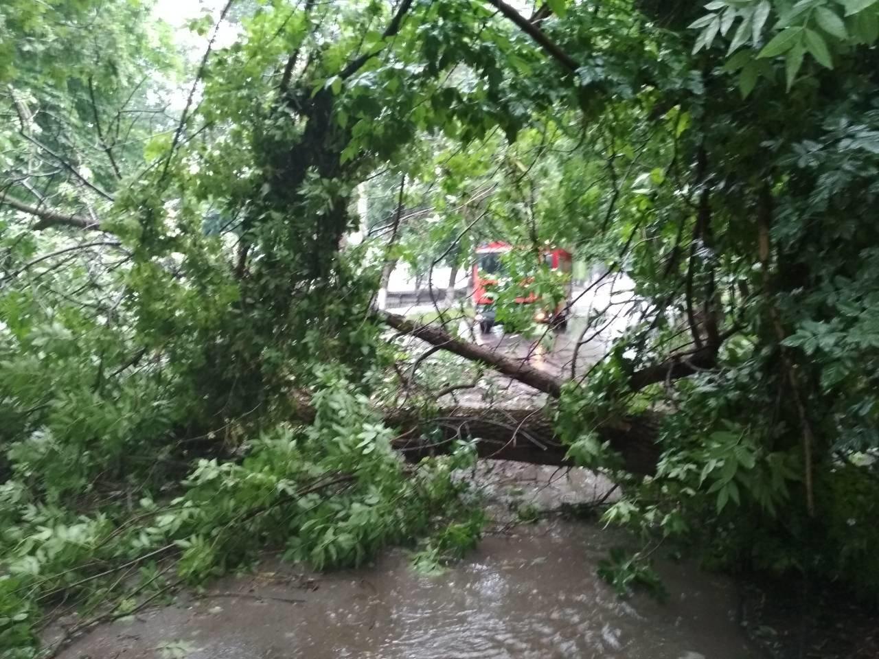 На вулиці Гагаріна на проїжджу частину впало дерево, фото-2