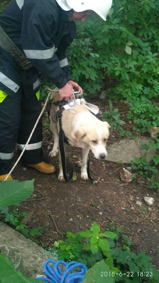 Рятувальники спільно з альпіністами рятували собаку зі Смотрицького каньйону, фото-1