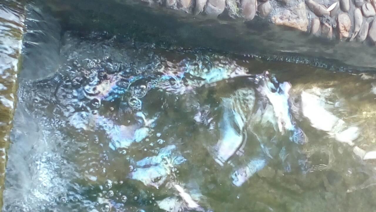 У річці Смотрич масово подохла риба через невідому паливну речовину, фото-8