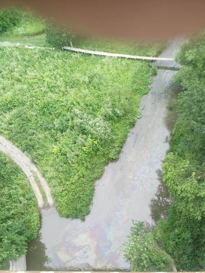 У річці Смотрич масово подохла риба через невідому паливну речовину, фото-2