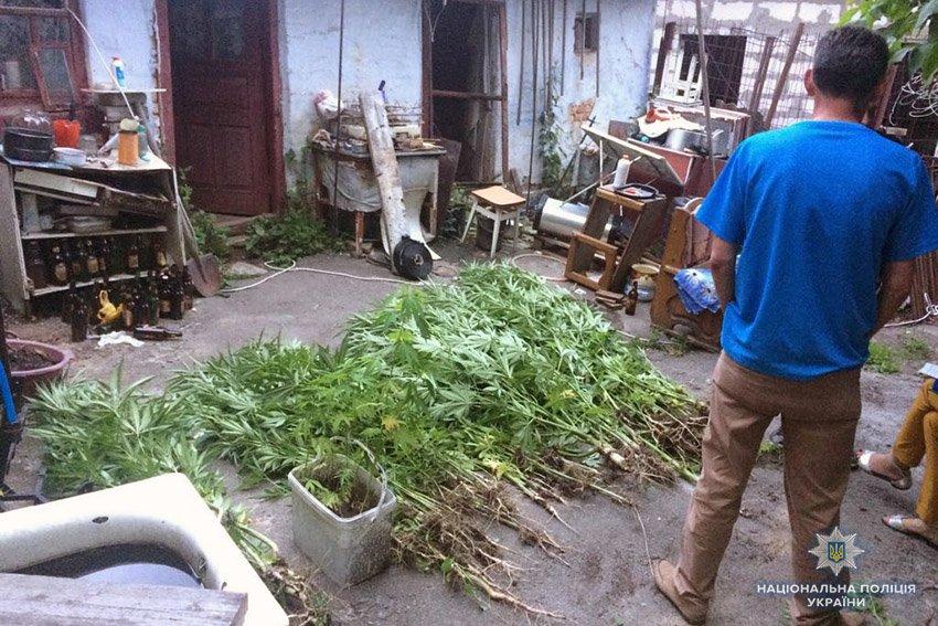 У подвір'ї 48-річного хмельничанина поліцейські виявили 250 кущів коноплі, фото-3