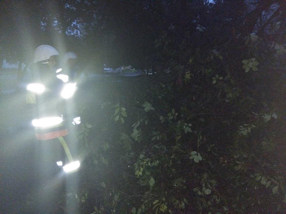 Через негоду у Кам'янці майже щодня падають дерева, фото-4
