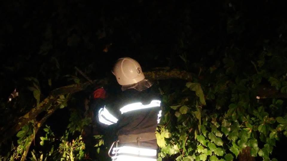 Через негоду у Кам'янці майже щодня падають дерева, фото-1