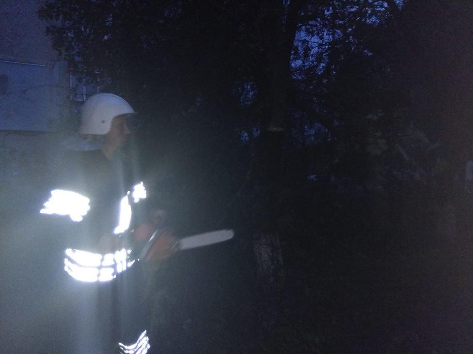 Через негоду у Кам'янці майже щодня падають дерева, фото-3
