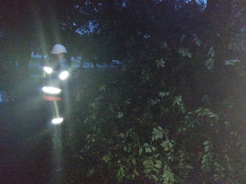 Через негоду у Кам'янці майже щодня падають дерева, фото-5