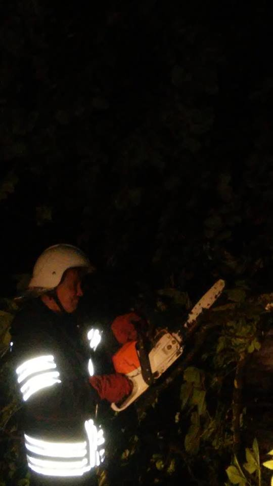 Через негоду у Кам'янці майже щодня падають дерева, фото-2