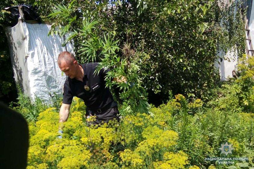 """Операція """"Мак"""" триває: поліцейські Хмельниччини продовжують виявляти незаконні посіви коноплі, фото-1"""