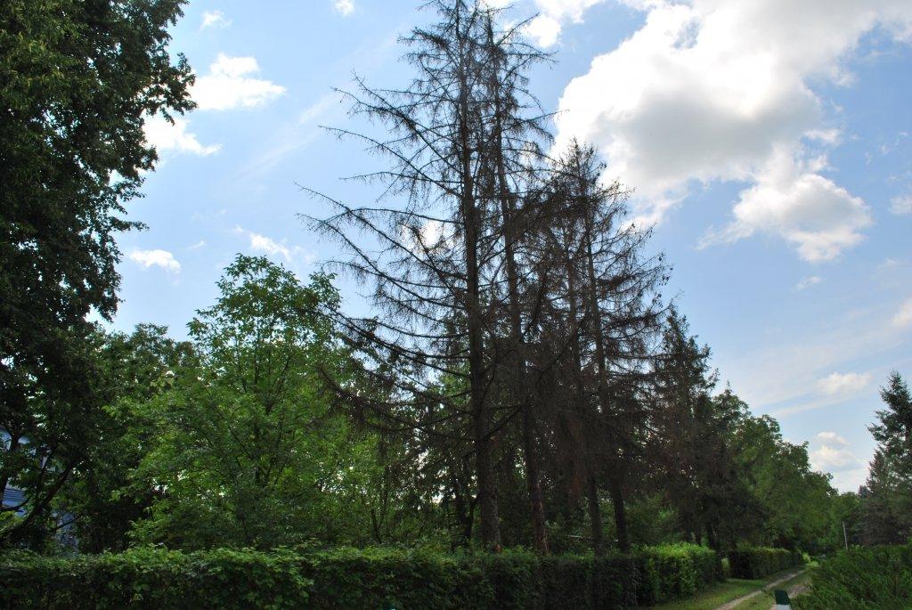 Дендропарк на Дунаєвеччині будуть покращувати, фото-4