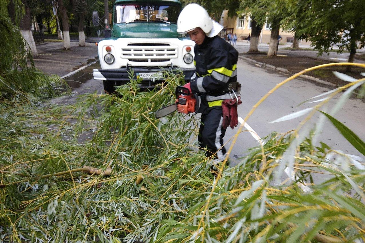 На вулиці Гагаріна впало дерево, фото-1