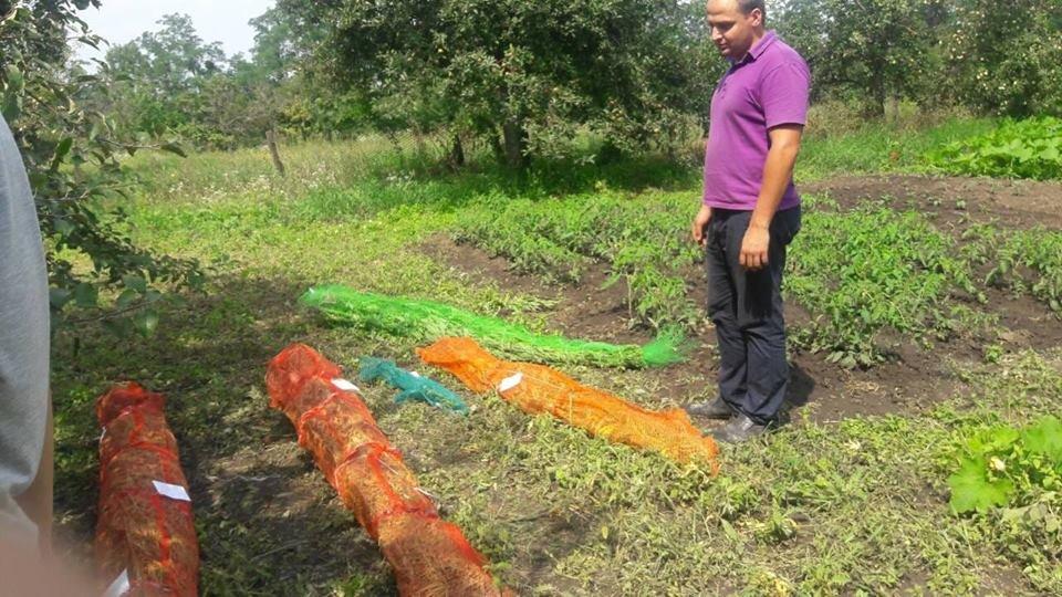 Гарбузи, кукурудза, конопля, або Що вирощують у селах Кам'янеччини, фото-4