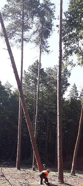 Кам'янець-Подільський лісгосп провів конкурс звалювальників лісу, фото-1