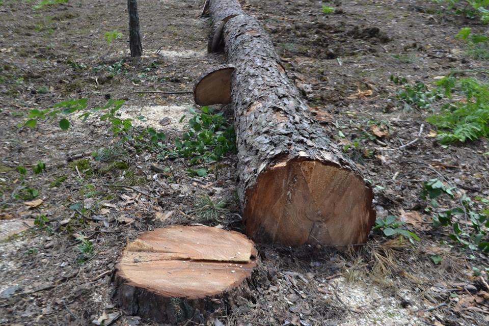 На Хмельниччині площа всихання дерев становить понад 10 тисяч гектарів, фото-1