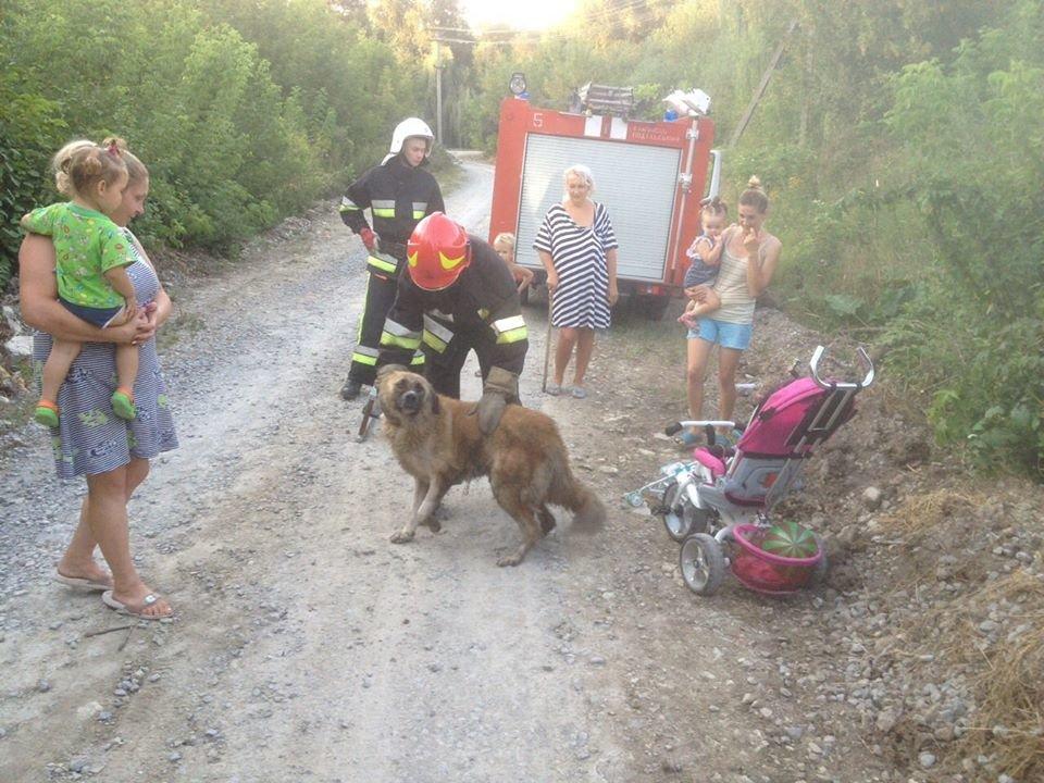На Кам'янеччині собака опинився в глибокій пастці, фото-2