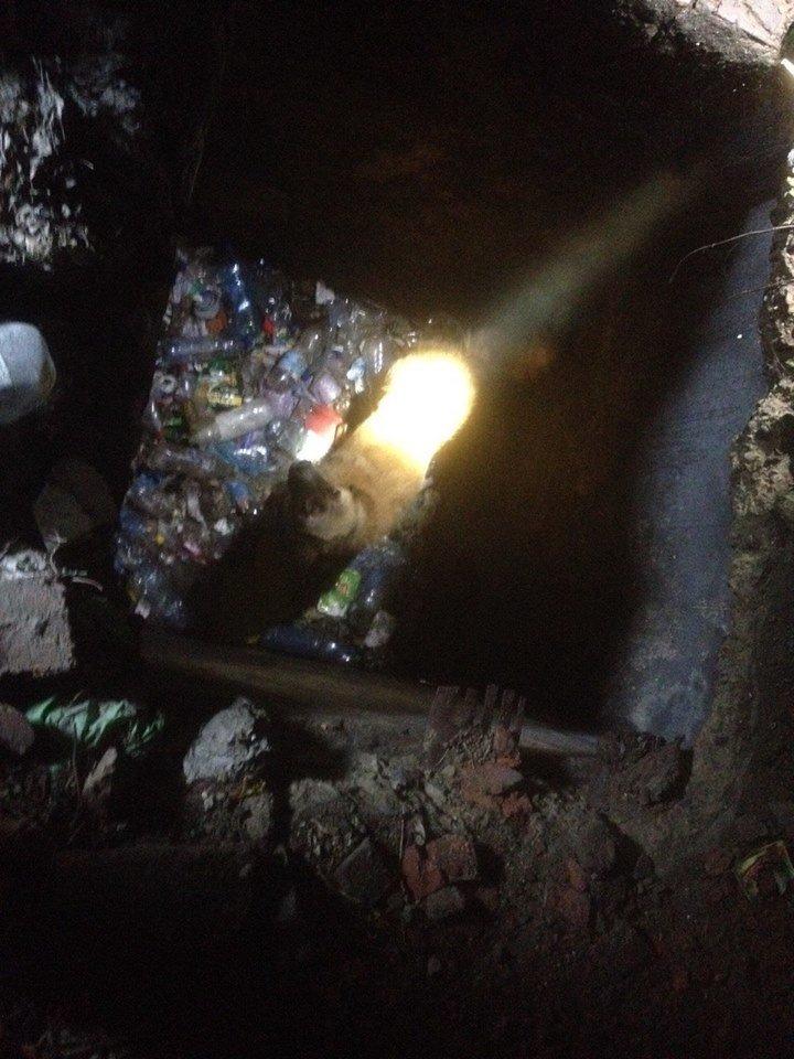 На Кам'янеччині собака опинився в глибокій пастці, фото-1