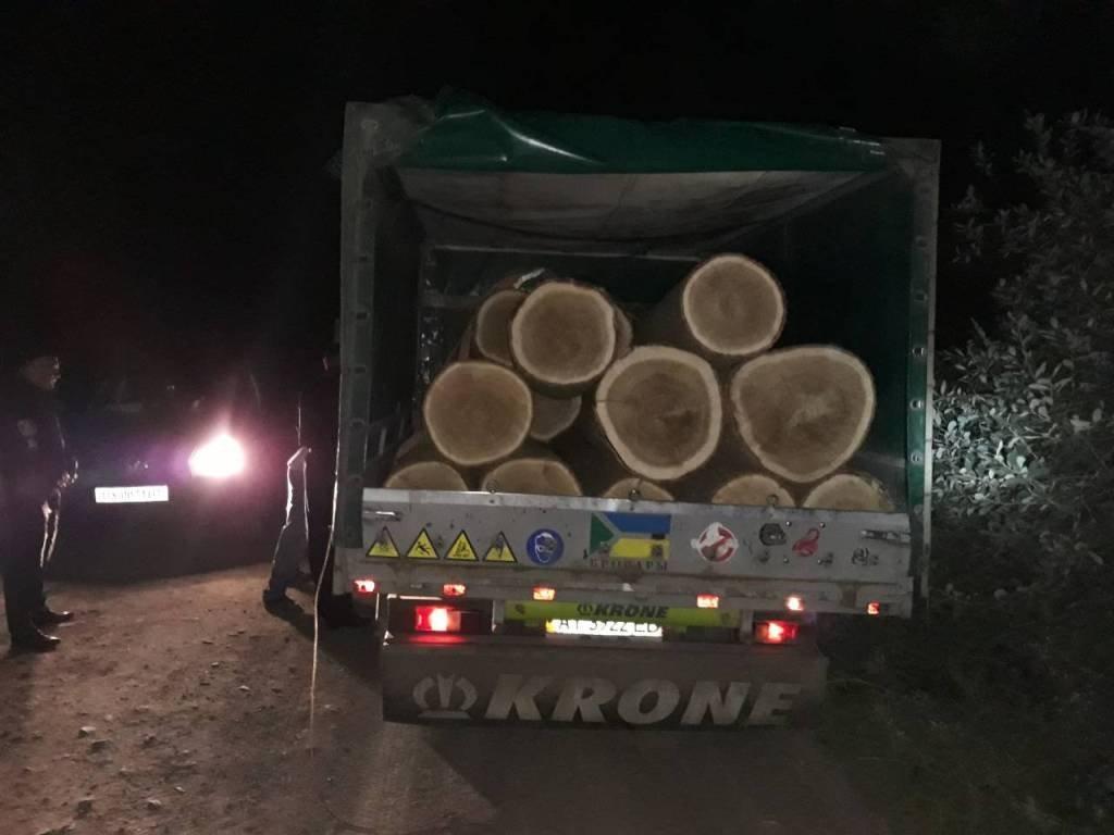 На Хмельниччині виявлено лісокрадів, які вирубали дерев на понад 77 тисяч гривень, фото-1