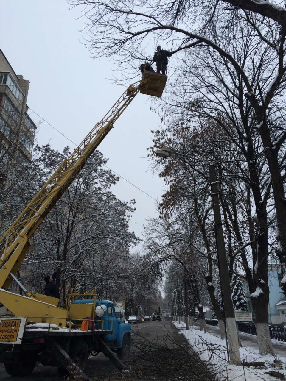 У Кам'янці проводять чистку дерев, фото-2