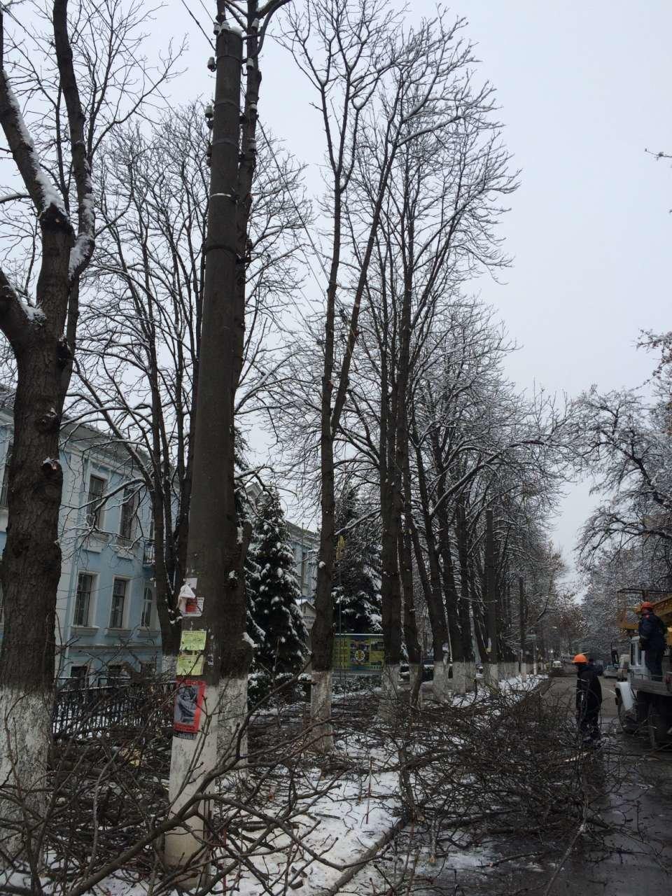 У Кам'янці проводять чистку дерев, фото-3