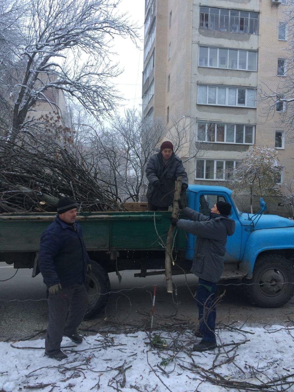 У Кам'янці проводять чистку дерев, фото-4