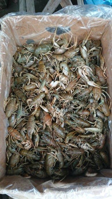 На ринку Кам'янця-Подільського виявлено незаконний продаж водних біоресурсів, фото-1